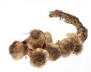 Smoked Garlic 10 String