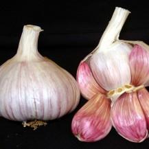 Lautrec Pink Garlic